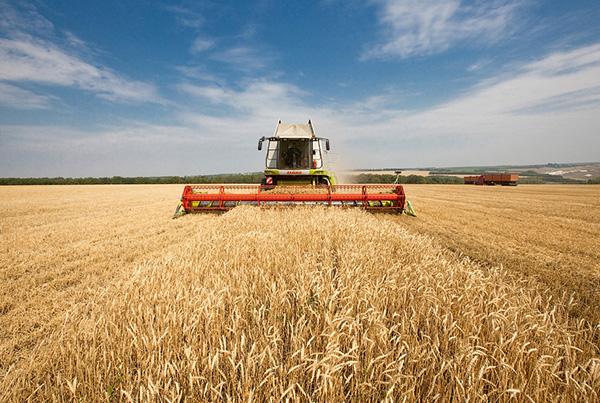 Шесть миллионов тонн зерна намолотили в Беларуси