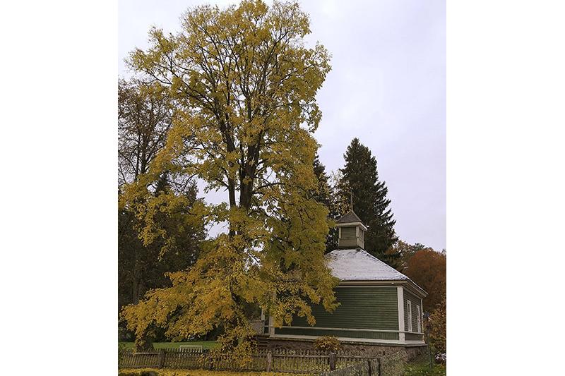 Осень в Михайловском вдохновляла Пушкина.
