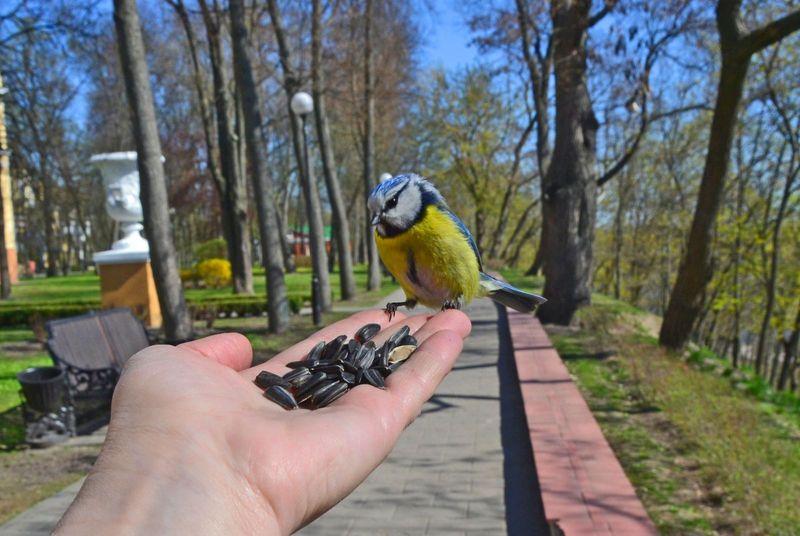 Фота ptushki.org