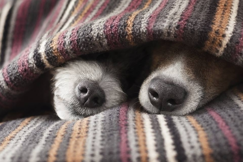Фото: dogscountryclub.co.uk