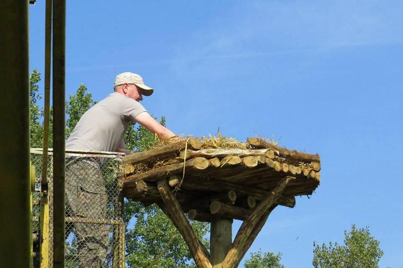 Фото с «Рекомендаций по установке искусственных гнездовий для белых аистов».