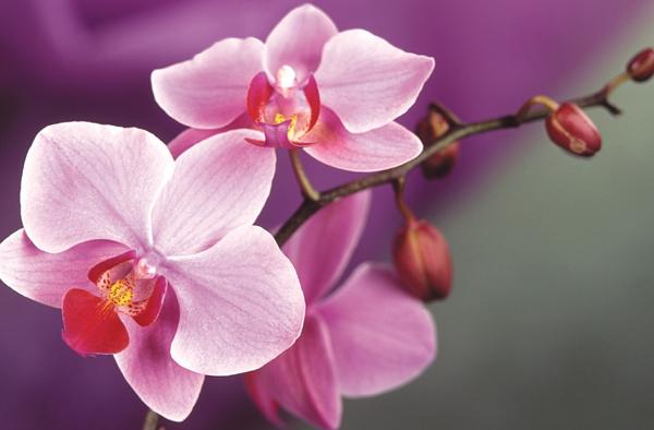Фота: orhidey.com