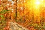 Шалаш среди золотых деревьев