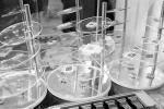 Какие направления нанотехнологий развиваются в Беларуси?