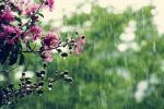 Прогноз погоды на 25 мая
