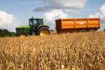 Беларускія аграрыі распачалі масавую ўборку ўраджаю