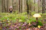 У Лоеўскім раёне работнік МНС выявіў трох дзяцей, якія згубіліся ў лесе