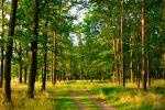 Традыцыйная акцыя «Тыдзень лесу» пройдзе з 1 па 8 красавіка