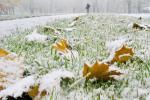 Дожди и мокрый снег ожидаются в Беларуси 15 ноября