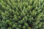 Две минчанки заблудились в лесах Червенского района
