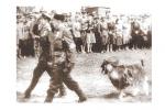 Рагаты «ўдзельнік» партызанскага парада