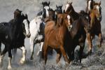 Усе па конях!