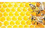 Мёд больш эфектыўны, чым антыбіётыкі?