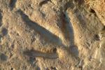 Следы динозавра возрастом 100 млн лет обнаружены в Китае