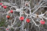 До 12 градусов мороза ожидается в Беларуси в выходные