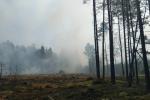 Два буйныя лясныя пажары тушаць у Гомельскай вобласці. Агульная плошча ачагоў перавышае 300 га
