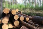 У заказніку ў Бярэзінскім раёне незаконна высеклі дрэвы на Br24 тыс.