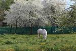 Как выглядит древнее белорусское местечко во время майского цветения