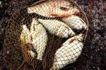 Не там знайшлі «рыбныя месцы»