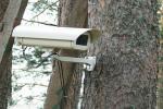 Количество фотоловушек в лесах будет увеличиваться