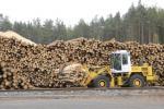 КДК Віцебскай вобласці пацікавіўся, ці па-гаспадарску выкарыстоўваюць і аднаўляюць лес