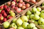 Высвятляем, ці ўсе яблыкі аднолькава карысныя