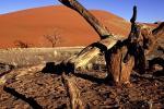 Глабальныя змены клімату дасягаюць «кропкі незвароту»?