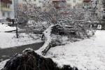 Из-за снежной нагрузки в столице упало восемь деревьев