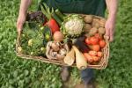 Как чувствуют себя отечественные мелкие фермерские хозяйства