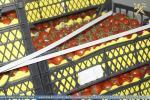 Мытнікі спынілі 56 тон агародніны і садавіны без належных дакументаў