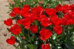 У батанічным садзе можна пазнаёміцца з легендамі беларускіх раслін