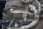 Затрыманы парушальнік, які займаўся незаконным рыбалоўствам