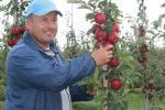 У Гродзенскiм занальным iнстытуце раслiнаводства паляпшаюць яблыкi