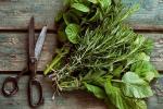 Сон на ульях и ароматы домашней кулинарии