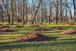 Як на Гродзеншчыне ўтылізуюць апалае лісце?