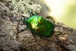 В лесных пожарах безвозвратно исчезают уникальные биологические виды