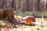 О безопасности даров леса