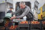 Рэпартаж з галоўнага клубнічнага рынку Беларусі