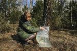 На ўчастках Старобінскага лясгаса на сёння сабрана звыш тысячы тон бярозавіку