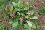 Якія кветкі і кусты нельга абразаць восенню