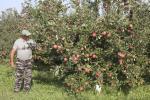 Площади плодово-ягодных насаждений планируют обновить и расширить