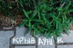 Акцыю «Крэйдавая батаніка» запусцілі ўСусветны дзень навакольнага асяроддзя