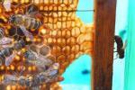 Музей меда и пчеловодства открыли в Березинском биосферном заповеднике