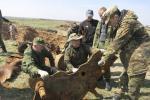 Фрагменты рэдкай мадэлі танка Т-70 знайшлі пошукавікі ў Быхаўскім раёне