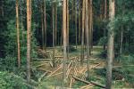 Нарвегія першай адмовілася ад вырубкі лесу