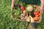 Производству органической продукции — зеленый свет