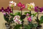 Кветка, якая нармальна развіваецца, тармозіць сваё цвіценне