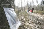 Лесхозы Брестской области продолжают заготовку целебного напитка
