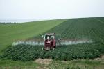 Як абясшкодзіць агародніну і фрукты ад пестыцыдаў?