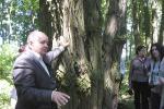 Як ратуюць стагадовыя дрэвы ў парку пад Лідай